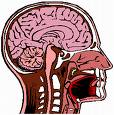 El Cerebro que queria ser un ordenador